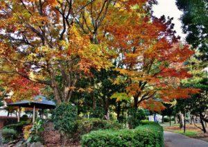 千葉県市川市中国分のじゅん菜池緑地