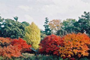 千葉県松戸市平賀にある、本土寺の紅葉