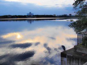 千葉県習志野市谷津干潟