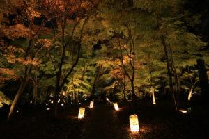 埼玉県比企郡滑川町森林公園の紅葉