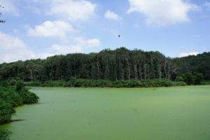 埼玉県比企郡滑川町の森林公園