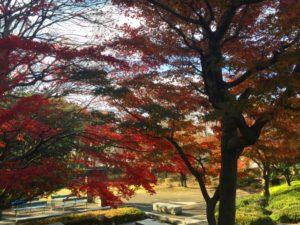 埼玉県狭山市の公園