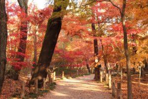 埼玉県新座市平林寺の紅葉