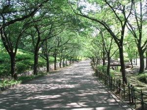 埼玉県上尾市の丸山公園