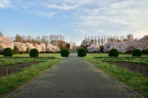 埼玉県さいたま市市民の森の桜