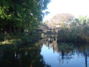杉並区の都立善福寺公園