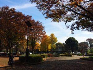 小平市の小金井公園