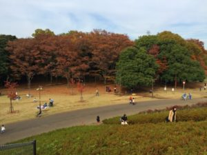 小金井市秋の小金井公園