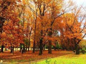 西東京市小金井公園の秋
