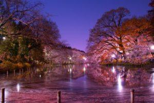 三鷹市井の頭公園の夜景