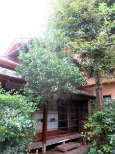 栃木市内の日本家屋