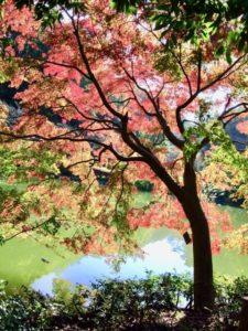 町田市の薬師池公園の紅葉