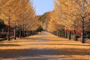 小鹿野町の風景