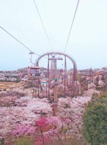 稲城市の桜ロープウェイ