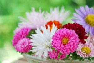 笠間市の花キク