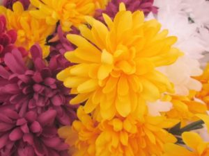 阿見町の花キク
