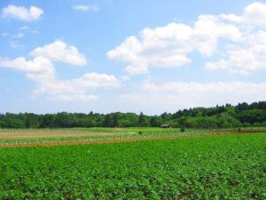 千葉市若葉区の農村風景