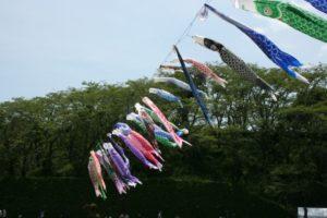 藤枝市蓮華寺池公園の鯉のぼり