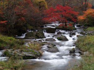 鮫川村の紅葉と渓流