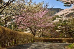 桑折町の半田山自然公園2