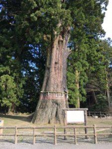 鴨川市の清澄寺の千年杉