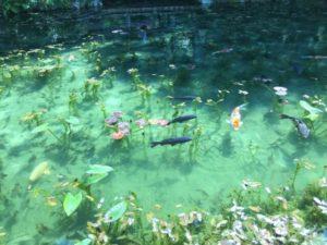 関市のモネの池
