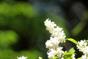 東浦町の花ウノハナ