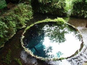 清水町の柿田川湧水群
