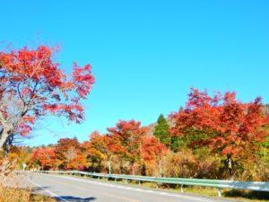 豊根村の紅葉