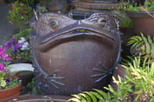 常滑市 カエルの水桶
