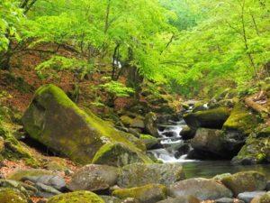 小菅村の渓谷