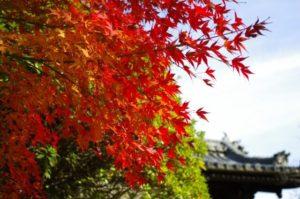大東市門前の紅葉