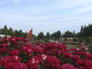 伊丹市の荒牧バラ公園