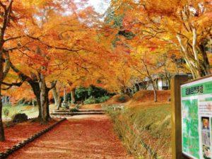 丹波市近畿自然歩道の紅葉