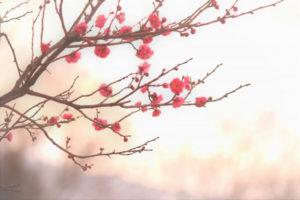 王寺町の木ウメ