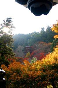 桜井市の長谷寺