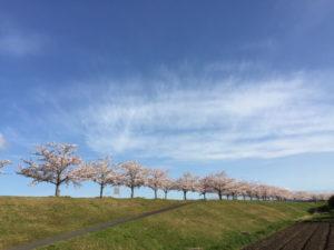小野市おの桜づつみ回廊