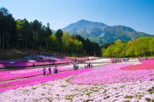埼玉県秩父の羊山公園