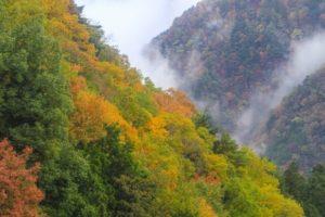 愛媛県石鎚山の紅葉