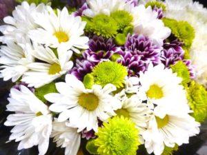 笠岡市の花キク