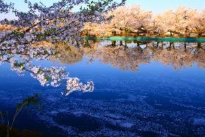 須坂市臥竜公園の風景