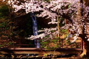 須坂市臥竜公園の滝と桜