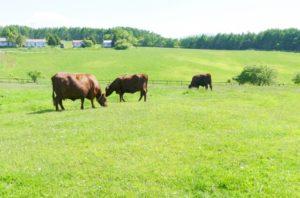 長和町の長門牧場