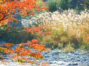 大鹿村の自然風景