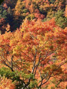 木曽町の紅葉