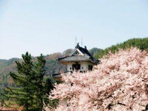 高遠城と桜