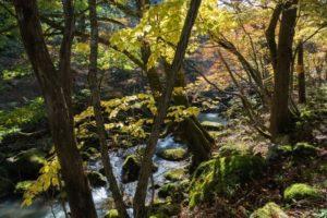 芦津渓谷の風景2