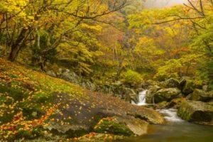 芦津渓谷の風景