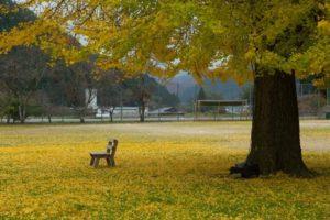 旧日野小学校の風景