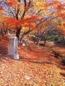 遠野市 紅葉の風景